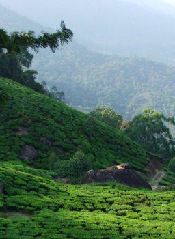 Kerala Hill Stations