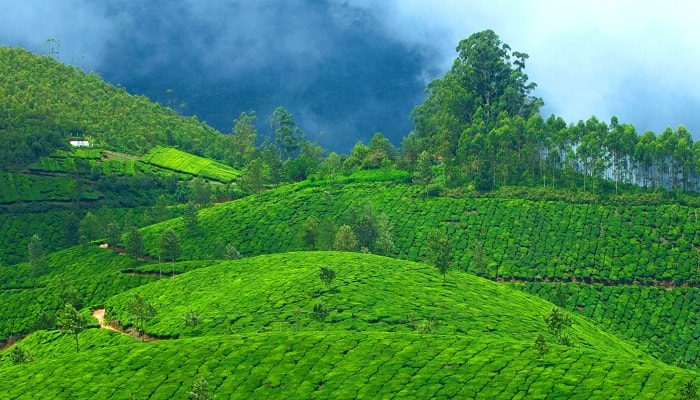 Kerala-Tour-Package-from-Delhi