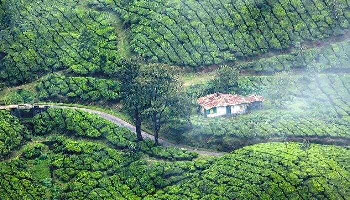 Munnar-thekkady-tour-package