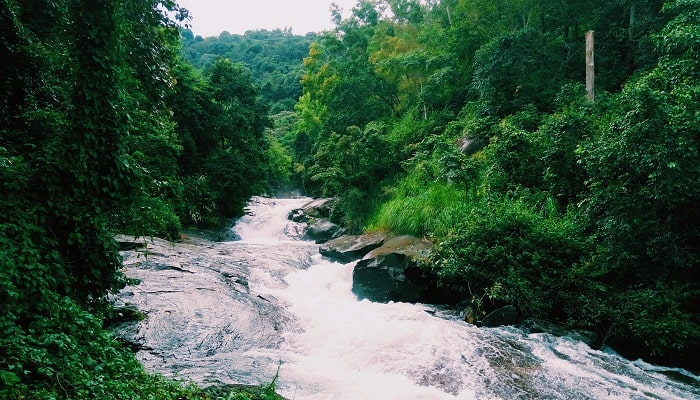 River_of_Wayanad